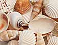 Small Shells Packs Craft Shells & Beach Mix, cockle, periwinkle shell, mitre shell, umbonium shell, nassa, ark shell, mitre sanuisuga, trocha